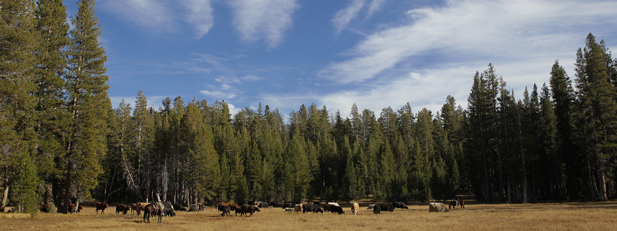 Public Lands Grazing