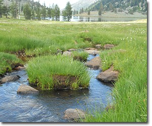 Public Lands Grazing Microbial Pollution and Water Quality