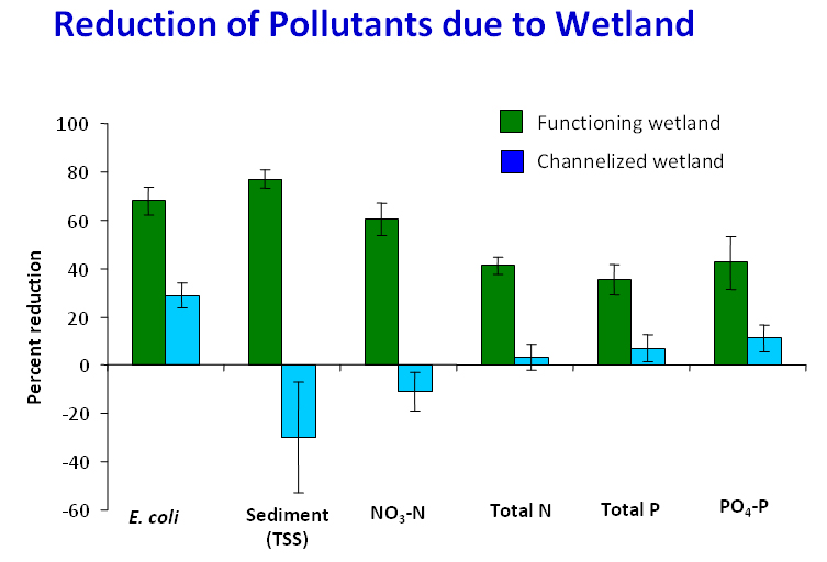 pollutants_wetland_graph