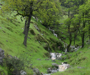 Oak woodland seasonal stream