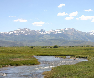 Mountain meadow stream channel